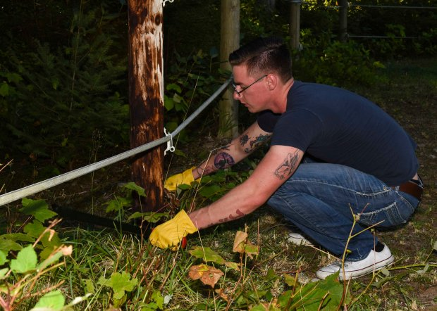 SILVERDALE, Wash. (Aug. 17, 2016) - Air Traffic Controller Airman Kenneth McTaggart, a native of Atlanta, removes unwanted shrubs and weeds around an electric fence while volunteering at One Heart Wild Education Sanctuary in Silverdale, Wash. Nimitz is currently undergoing an extended planned incremental maintenance availability at Puget Sound Naval Shipyard and Intermediate Maintenance Facility where the ship is receiving scheduled maintenance and upgrades. (U.S. Navy photo by Mass Communication Specialist Seaman Weston A. Mohr/Released)