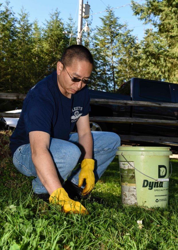 SILVERDALE, Wash. (Aug. 17, 2016) - Air Traffic Controller 1st Class Vincent Pang, a native of Schenectady, N.Y., removes weeds weeds while volunteering at One Heart Wild Education Sanctuary in Silverdale, Wash. Nimitz is currently undergoing an extended planned incremental maintenance availability at Puget Sound Naval Shipyard and Intermediate Maintenance Facility where the ship is receiving scheduled maintenance and upgrades. (U.S. Navy photo by Mass Communication Specialist Seaman Weston A. Mohr/Released)